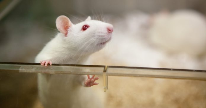 Is Animal Testing Ever Justified?