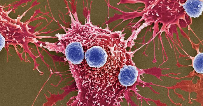 A New Cancer Treatment That Is Faster, More Efficient and Less Risky Is Coming: Bacteria Bombs