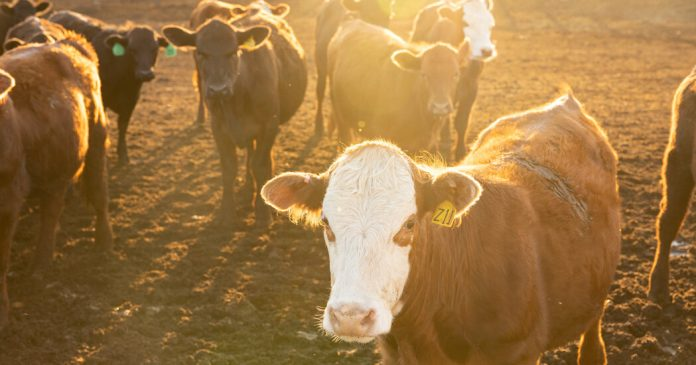 Summer Reading Contest Winner Week 6: On 'Your Steak Is More Expensive, but Cattle Ranchers Are Missing Out'